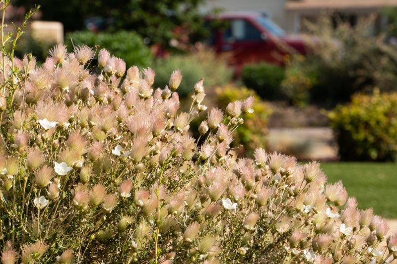 City of Victorville to Host FREE Tree & Shrub Pruning Workshop